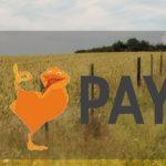 Перевод средств с Киви на Пайер: основные способы